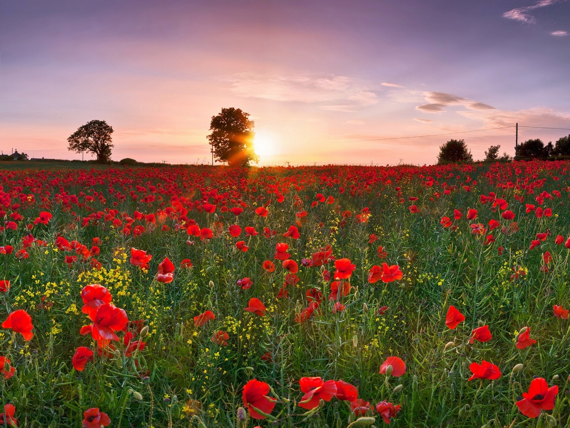 Field poppies sunset wallpaper | 1920x1440 | 117169 | WallpaperUP