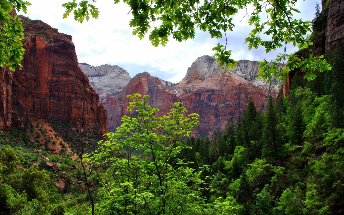 mountains rocks nature trees branches wallpaper