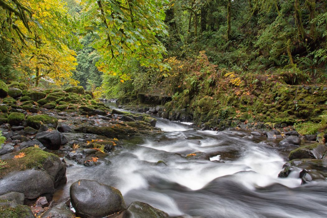 river forest rocks Fall autumn wallpaper