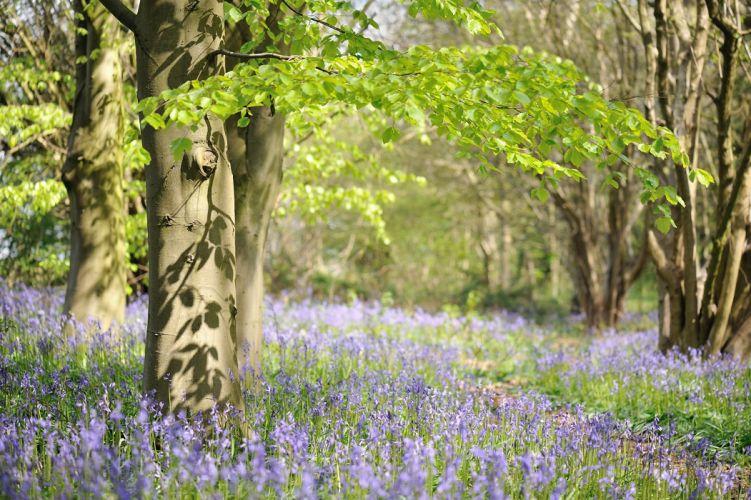landscape trees flowers spring wallpaper