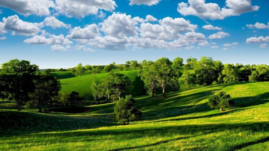 summer field meadow trees sky clouds wallpaper