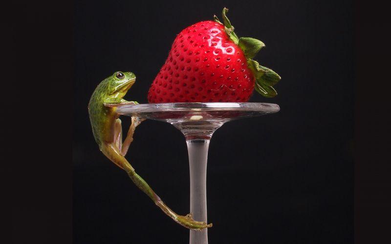 frog strawberry wallpaper