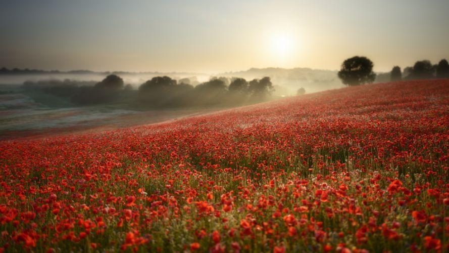 flower landscape sunrise fog wallpaper