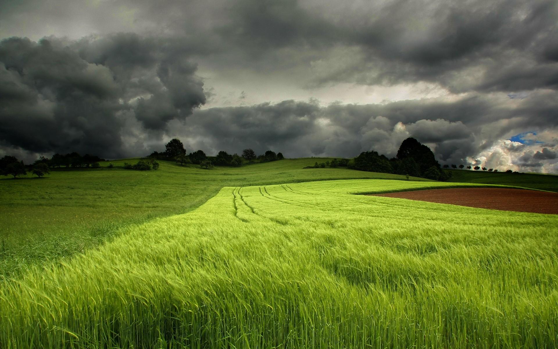 природа поле трава зеленая  № 610577 загрузить