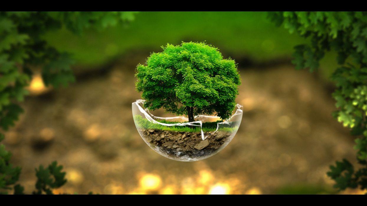 trees trees creative nature green wallpaper