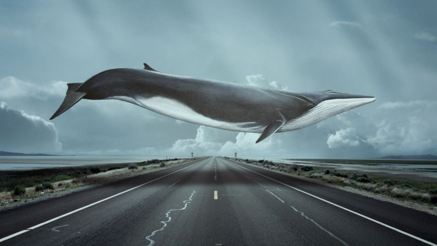 Whale Road WTF humor funny fantasy wallpaper