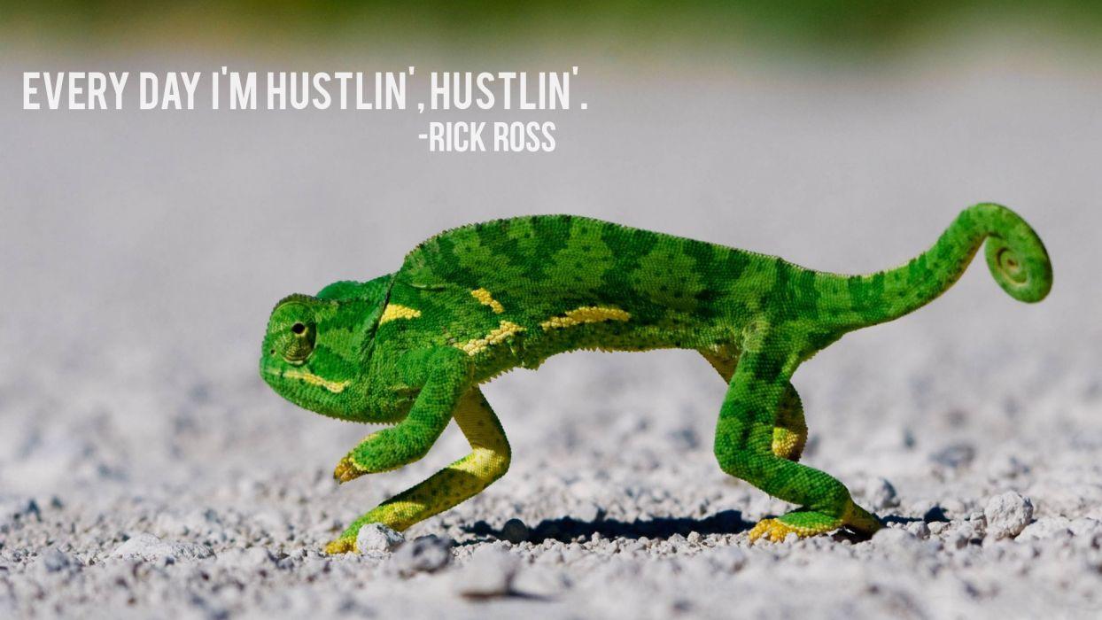 Hustlin Chameleon Lizard rap hip hop humor funny wallpaper