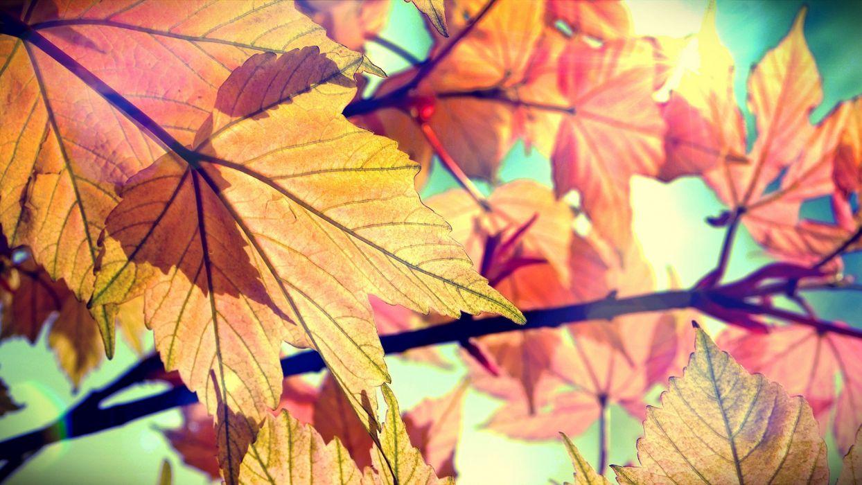 Leaves Autumn wallpaper