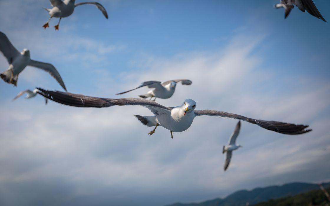 Seagulls Birds bokeh wallpaper