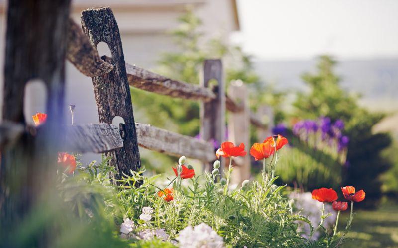 Fence Flowers wallpaper