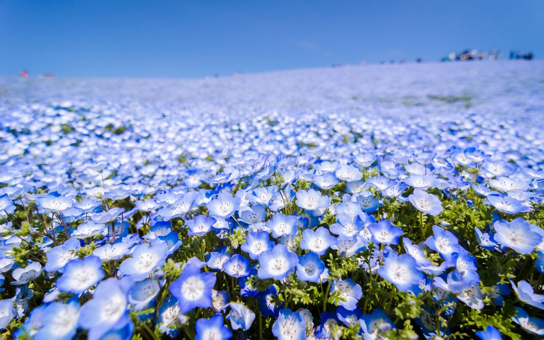 Flowers Field wallpaper