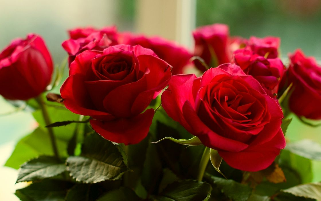 Roses Red Flowers   f wallpaper