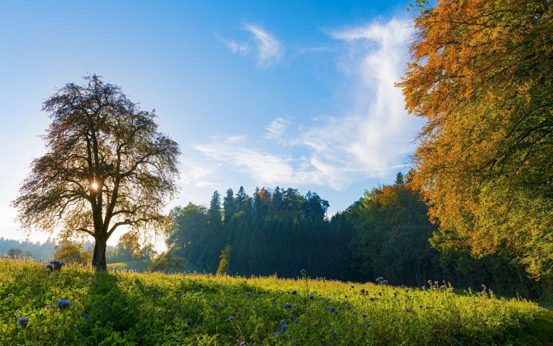 Switzerland trees meadow flowers autumn fall sky landscape wallpaper