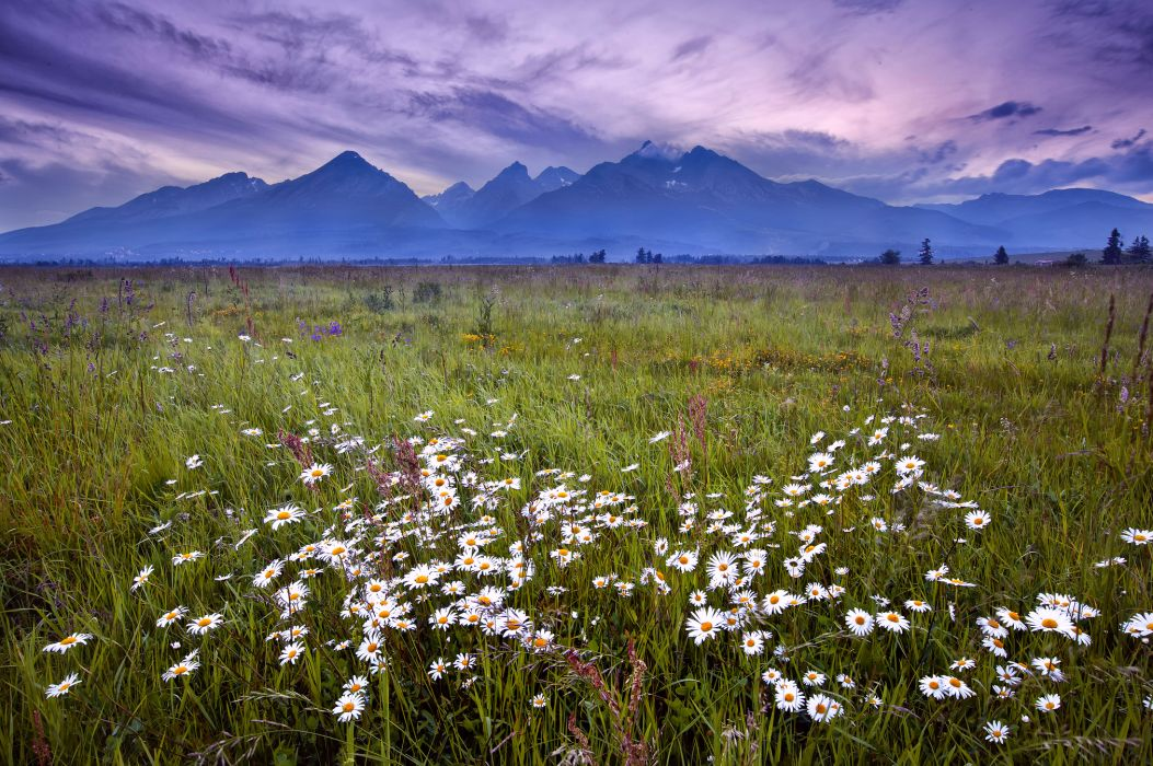 Tatra Mountains grass flowers daisies mountains evening lilac sky clouds landscape wallpaper