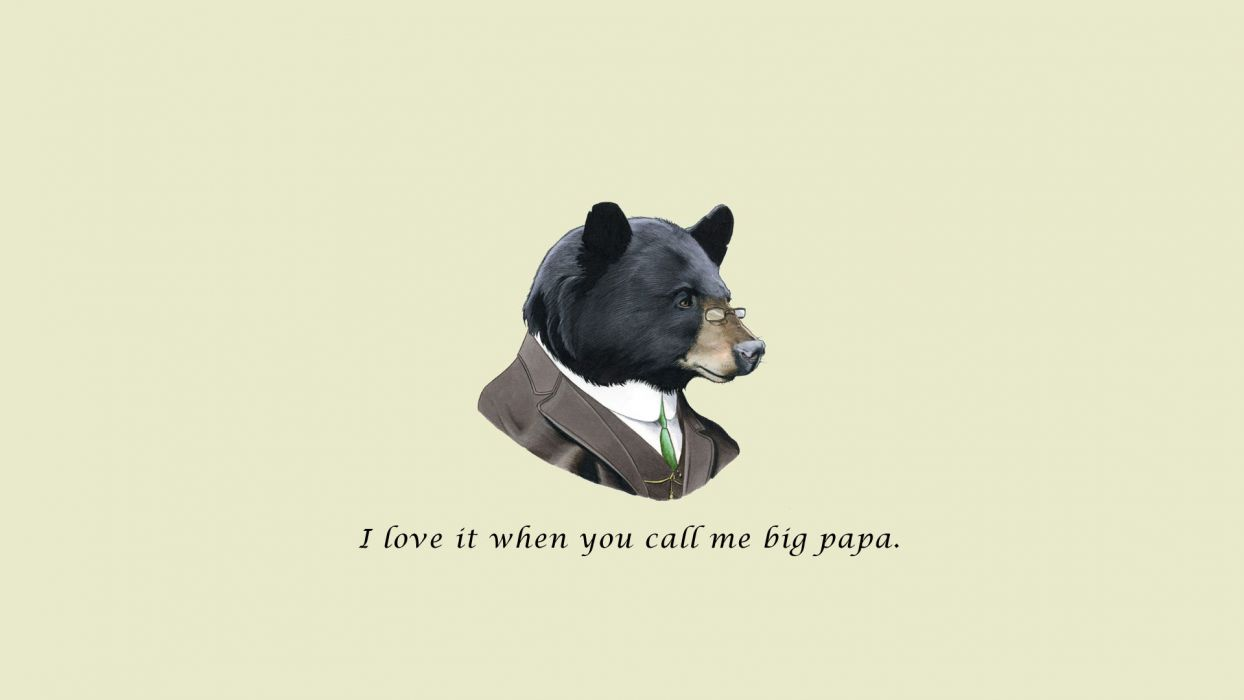 wtf humor funny bear wallpaper