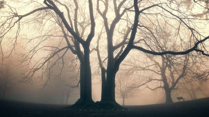 trees fog mist mood bokeh park garden druid nature wallpaper