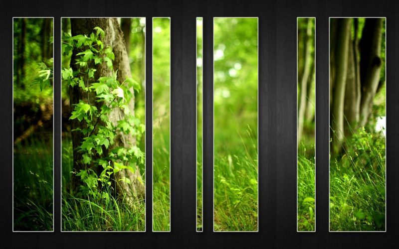 wood forests wallpaper