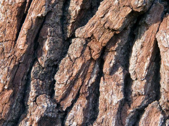 wood macro tree trunk wallpaper