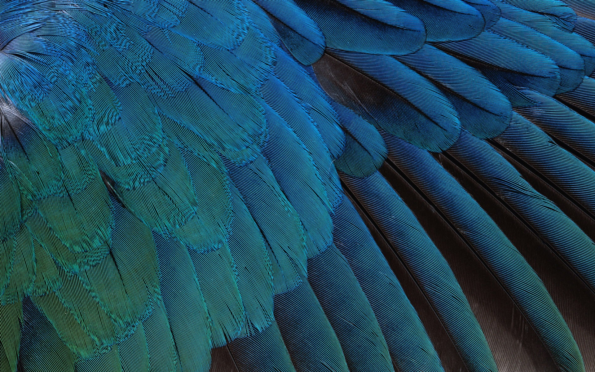 indian feather background feathers - photo #34