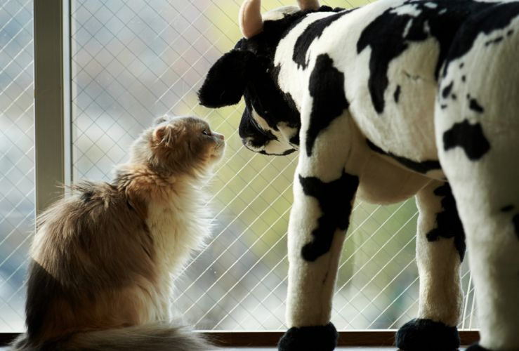 cat toy box cow wallpaper