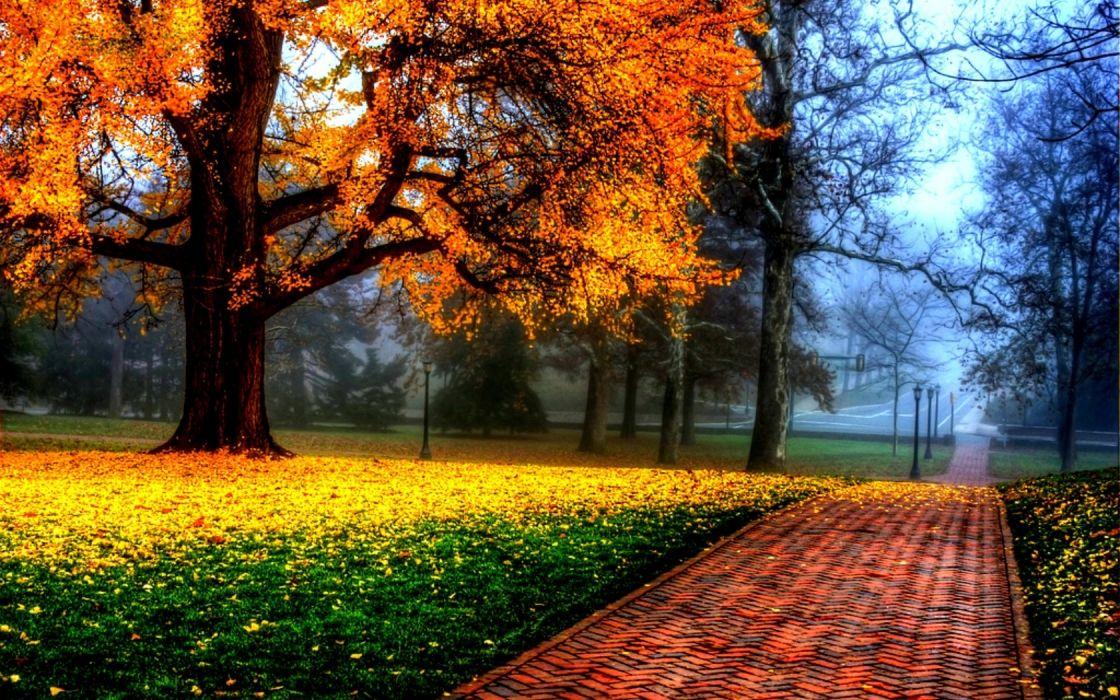 clouds landscapes nature trees multicolor seasons brilliant parks Nature Environment autumn wallpaper