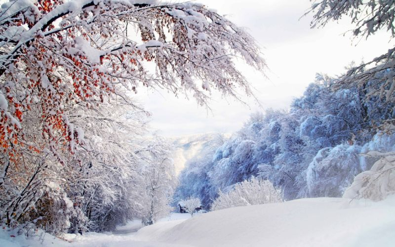 forest snow house winter wallpaper