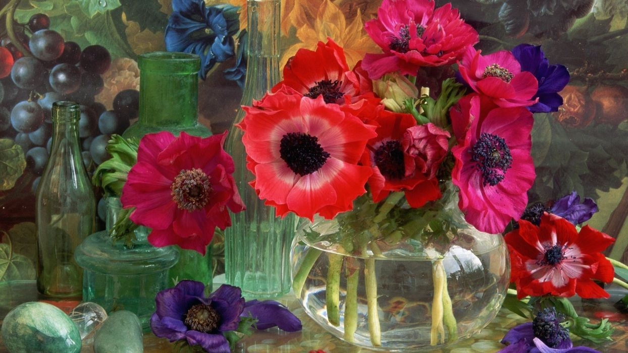 flowers anemones flower wallpaper