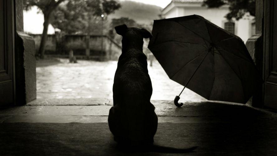 animals dogs umbrella mood rain humor wallpaper