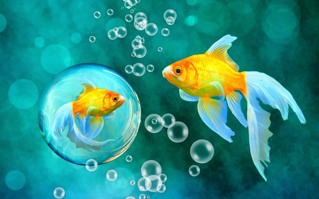 bubbles goldfish blue bokeh sea fish fishes underwater water gold wallpaper