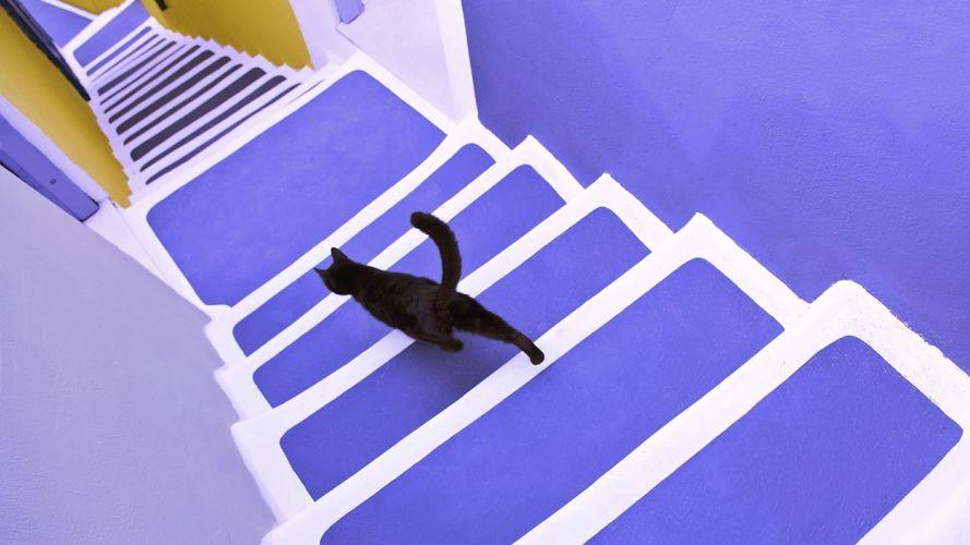 cats black cat violet santorini wallpaper