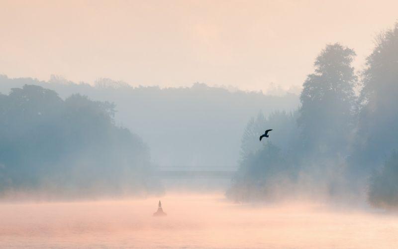 morning lake mist bird landscape wallpaper