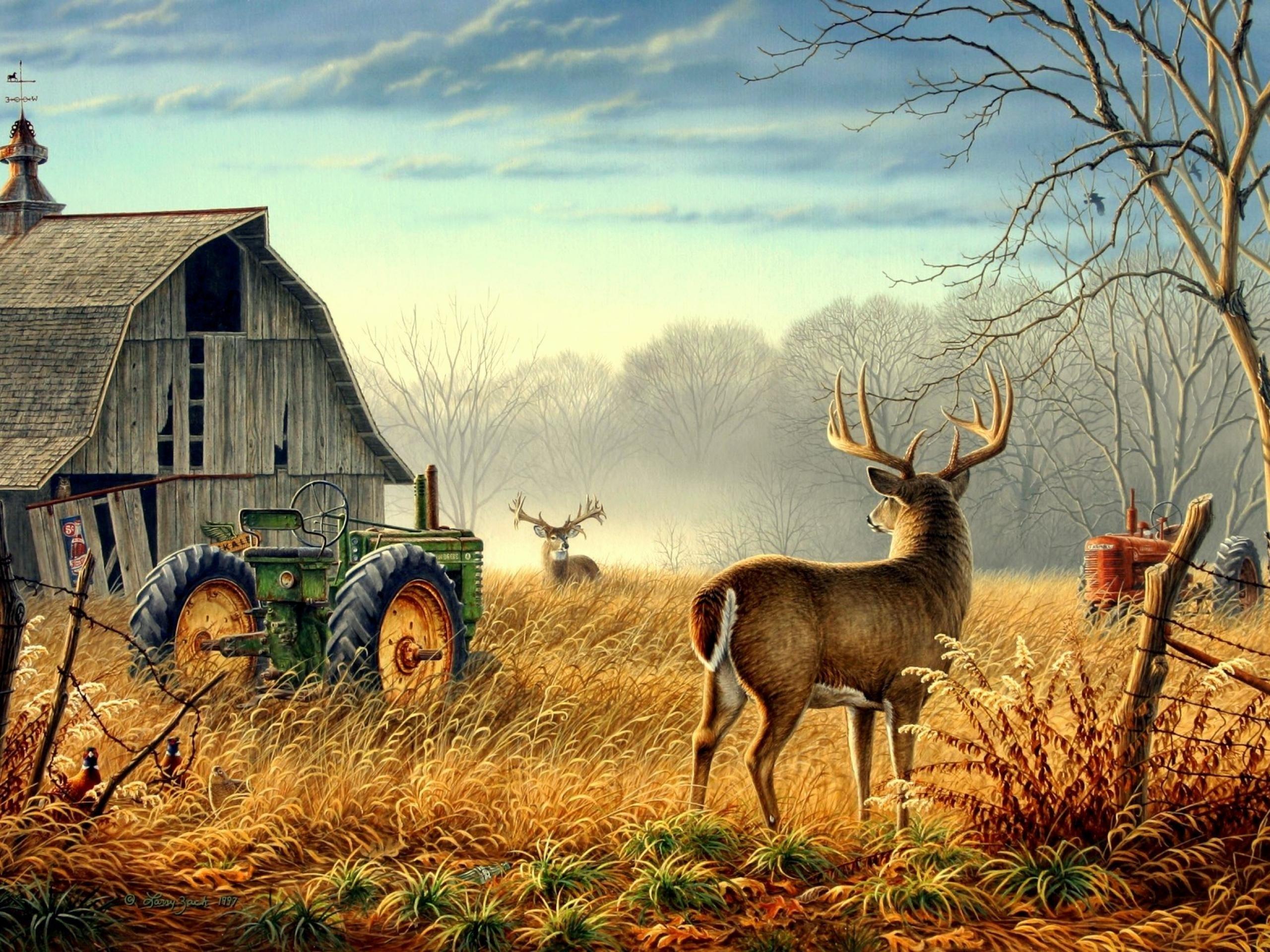 Nature Trees Fences Birds Fog Mist Deer Barn Farm