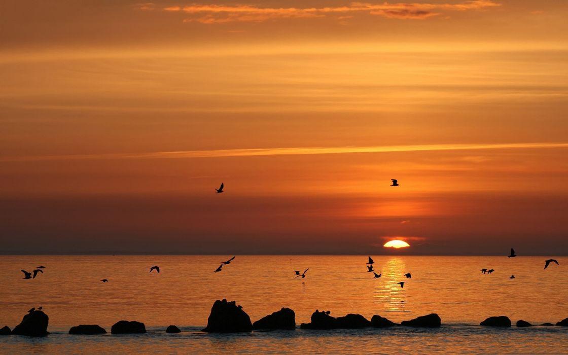 sunset landscapes birds waterscapes beach wallpaper