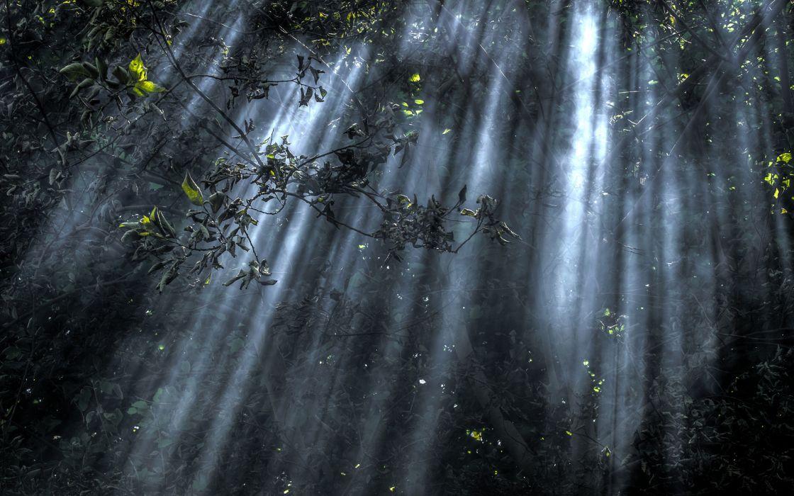 Trees Sunlight e wallpaper