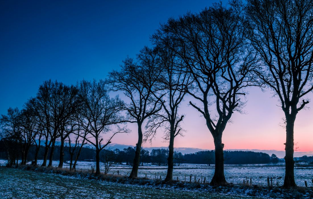 winter frost trees field morning norway wallpaper