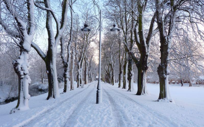 winter park road trees lights landscape wallpaper