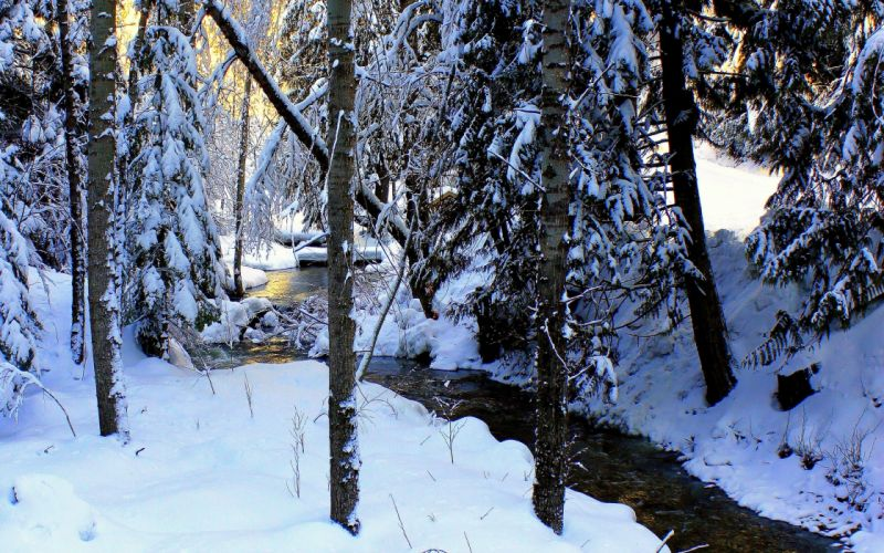 winter river trees snow landscape wallpaper