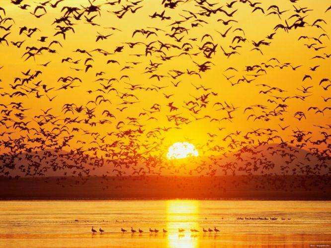bird Sunset water birds bokeh wallpaper