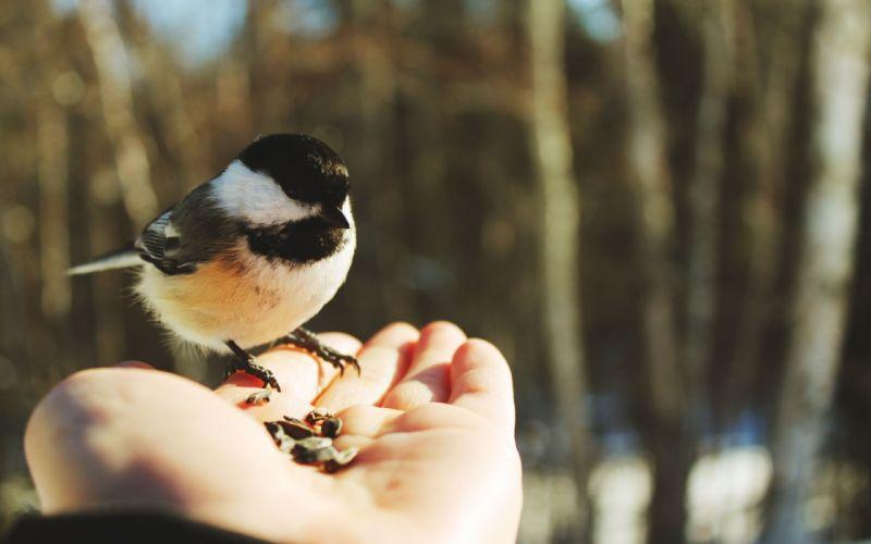 birds Animals Bird wallpaper