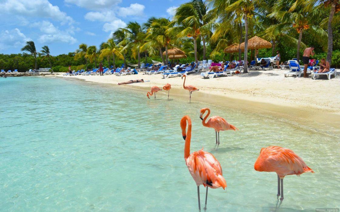 flamingo summer beach beach Tropical Island water birds   g wallpaper