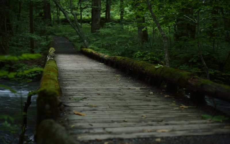 Forest Path Trail Trees Moss wallpaper