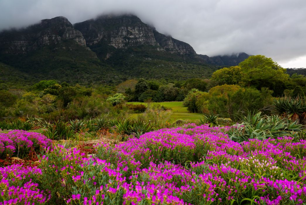 Garden South Africa Mountains Kirstenbosch Botanic Nature wallpaper