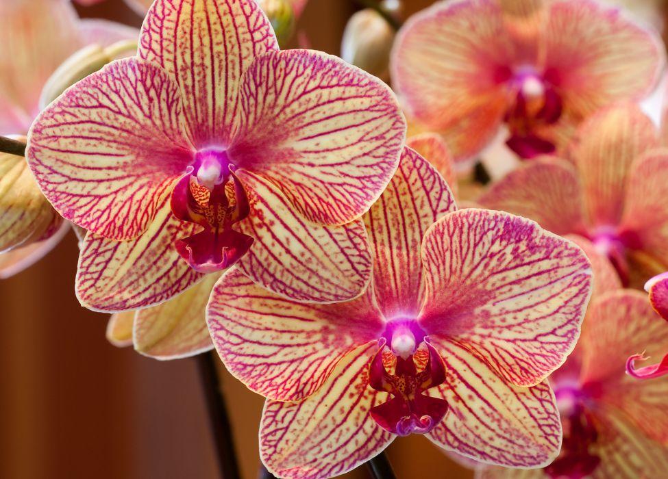 Orchids exotic petals wallpaper