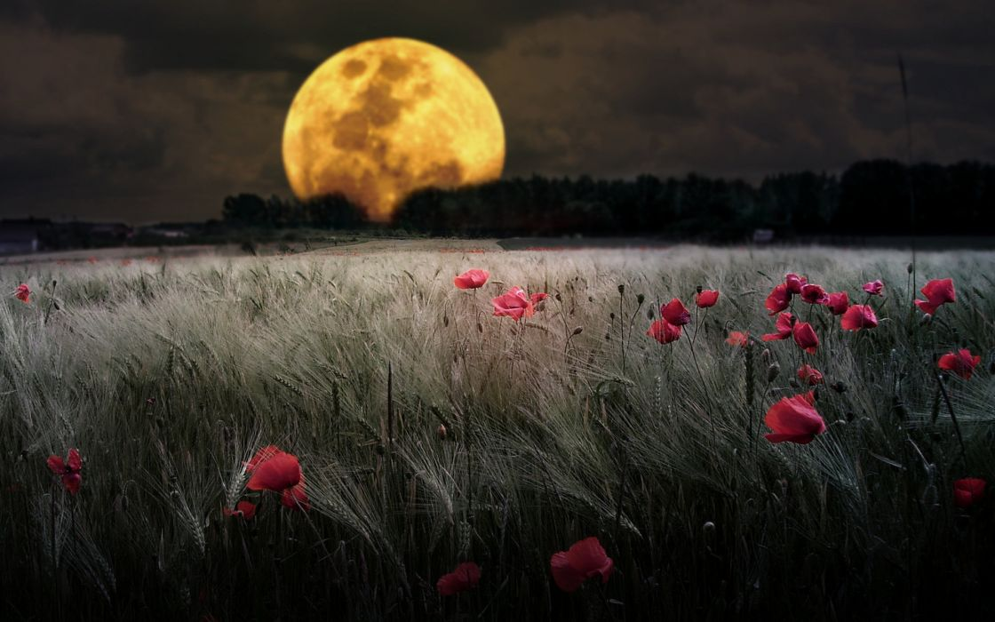 Planets and moons ground corn field Montage poppy wildflower wallpaper