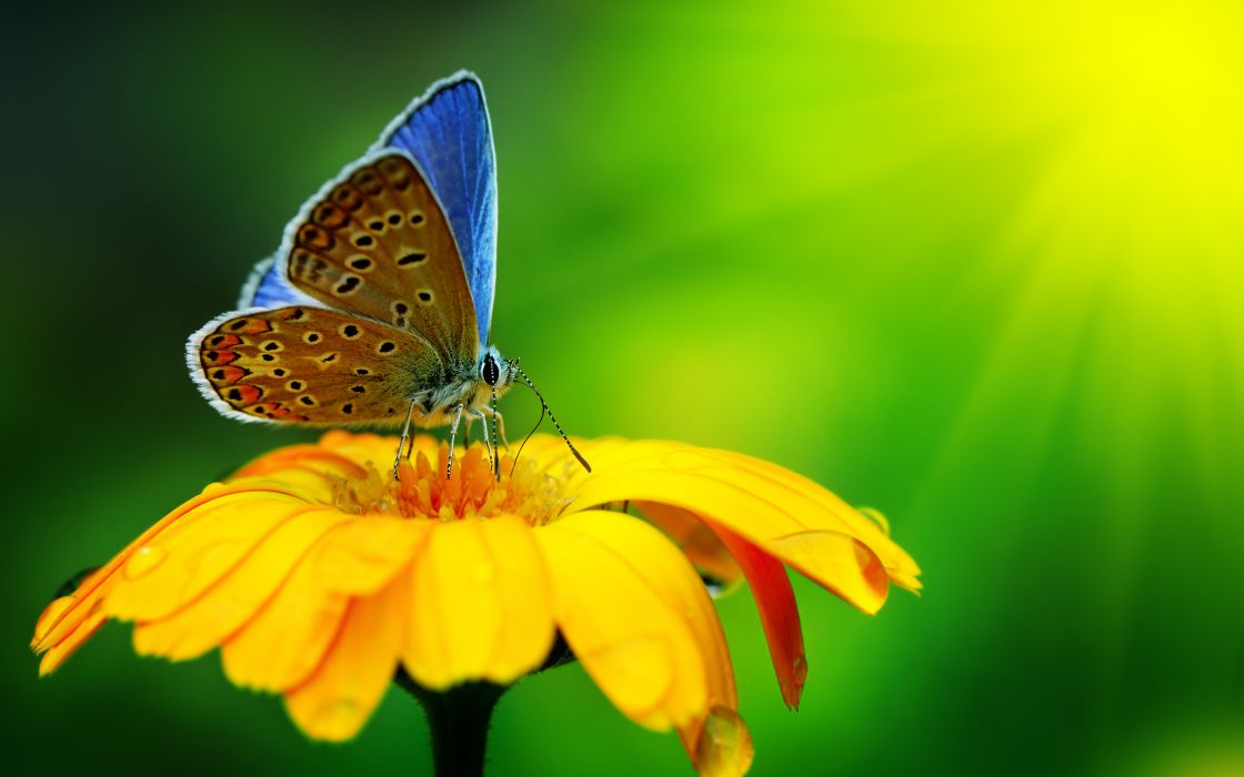 butterfly insect flower drops yellow green bright wallpaper