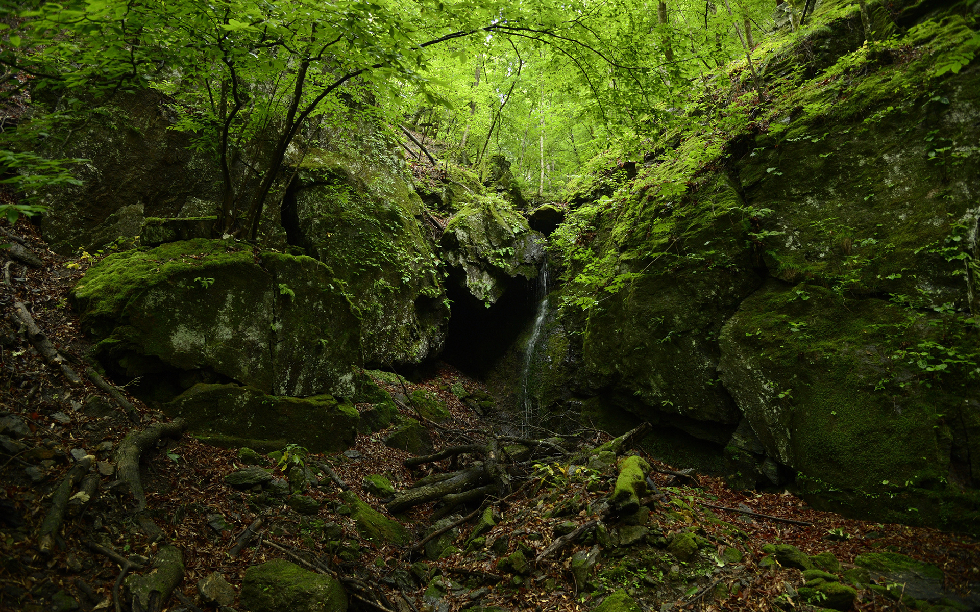 forest cave green trees wallpaper 1920x1200 119957 wallpaperup