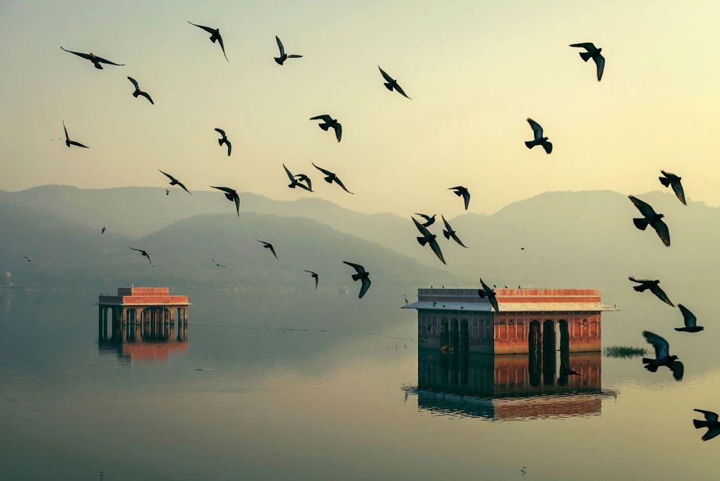 Rajasthan home India Jaipur mahesh b photography water birds morning bokeh wallpaper
