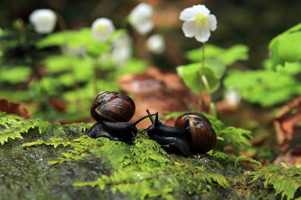 snails macro leaves flowers bridesmaids wallpaper