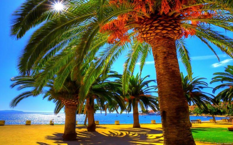 summer palm beach shadow wallpaper