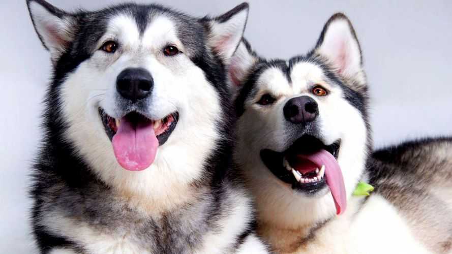 dog muzzle wallpaper